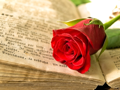 Close up of a red rose lying across an open page of an old book with German text.