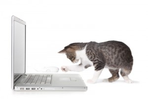 kitten_laptop